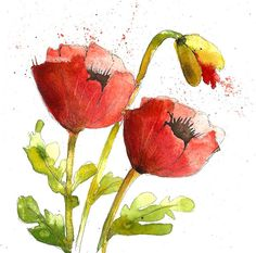 Martha Lever watercolour poppies