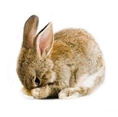 The Farm Family muursticker Baby Rabbit, Baby konijntje - Home Muursticker