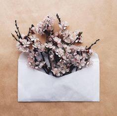 下次送花就用信封袋裝吧!讓女孩們心花朵朵開的浪漫獻禮 | 妞新聞 niusnews