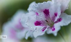 Photo so wet... by frederic gombert on 500px