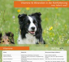 5 ganz einfache, effektive Hausrezepte in der Fütterung, die jeder Hunde- und Katzenhalter kennen sollte.