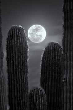 Desert Moonglow