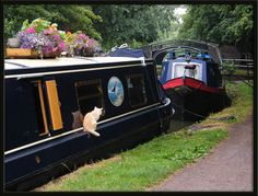 My cat would make an awesome canal boat cat!