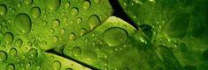 ANCORA NICHEL :: Allergia al Nichel