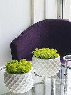 Bols de lichen vert printemps. Mousse naturelle stabilisée. 100% écologique et durable. Sans entretien. o% eau, 0% terre, 0% lumière. Création et réalisation Adventive. Interior plant Designer.
