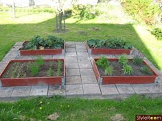 pallkrage,kryddträdgård