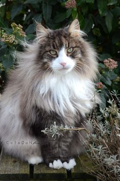 2014-Pepper-2 (by Les chaTs CalaDaN)