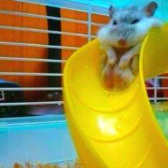 Too chubby for the slide :P