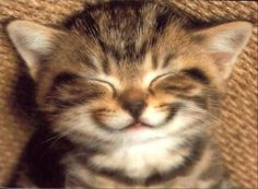 Puzzle de Chat souriant sur Puzzle-Box.fr