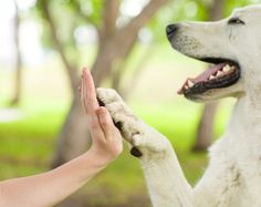 Dogs are surely one of the best creatures.Owning a dog is surely one of the best things you can do with your life. Here are some reasons to get a dog