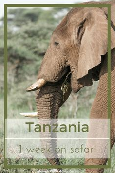 With a chance to spend a week on safari in Tanzania we ticked of another bucket list item and had one of our best travel experiences to date! Visit Jamaica, Jamaica Travel, Zanzibar Beaches, William And Son, Tanzania Safari, Serengeti National Park, 3 Three, Worldwide Travel, Kilimanjaro