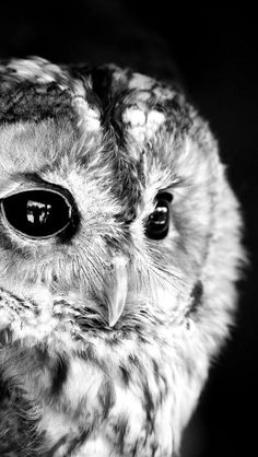 mama and baby owl photography - Google Search