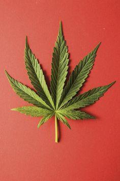 how to draw a cannabis leaf