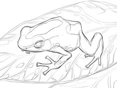 Dyeing Dart Frog coloring page from Frogs category. Select from 26977 printable crafts of cartoons, nature, animals, Bible and many more.