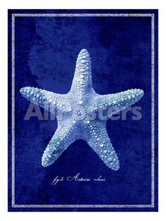 Starfish Landscapes Photographic Print - 46 x 61 cm