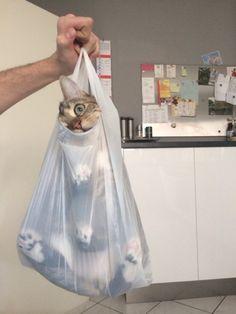 入りにくいほど入りたい。袋にしっぽり入り込み出ようとしない猫袋画像 : カラパイア