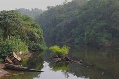 """The rainforest of South West Cameroon, a global biodiversity """"hot spot."""""""