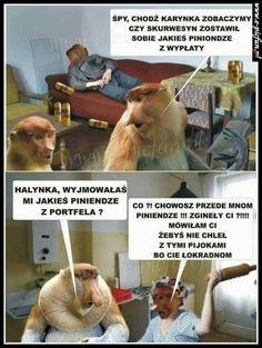 Wtf Funny, Best Memes, Animals And Pets, Haha, Poland, Text Posts, Pets, Ha Ha