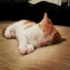 Kitten naptime - Your Fun Pics Puppies And Kitties, Cute Cats And Kittens, Kittens Cutest, Cute Baby Animals, Animals And Pets, Funny Animals, Funny Cats, Beautiful Cats, Animals Beautiful