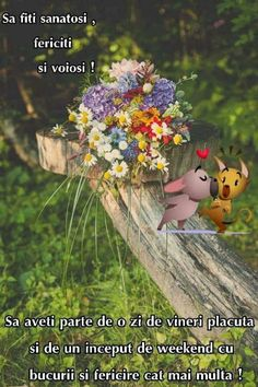 Alice, Quotes, Plants, Amor, Good Morning Coffee, Gif Pictures, Quotations, Qoutes, Plant