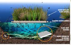 Floating Gardens / Floating Wetlands - Fytogreen Australia Biotope Aquarium, Human Traffic, Anchor Systems, Floating Garden, Water Me, Plant Species, Hydroponics, Screen Shot, Google Images