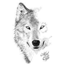 MaldeCap Ilustraciones. Ilustración del lobo huargo de Juego de tronos. #GameofThrones #juegodetronos #ilustración #illustration #draw #lobo #wolf #stark