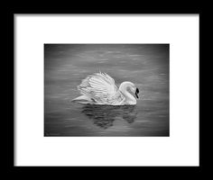 Swan Framed Print featuring the drawing Single Swan by Faye Anastasopoulou Hope Symbol, Native American History, Frame Shop, Hanging Wire, Great Photos, Framed Art Prints, Clear Acrylic, Swan, Fine Art America