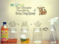 Homemade Itchy Dog Spray: Mix ingredients in spray bottle/jar with lid & shake well before use. Apply to clean skin & coat, massage, rinse, & pat dry.