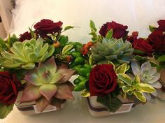 rose rosse e piante grasse