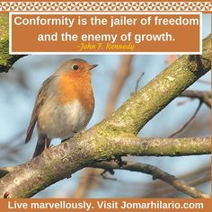 """""""Conformity is the jailer of freedom and the enemy of  growth."""" -John F. Kennedy Live marvellously. Visit www.Jomarhilario.com Conformity, Hilario, Freedom, Thoughts, Live, Words, Garden, Liberty, Political Freedom"""