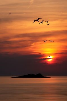 Birds in flight bird island by albin bezjak ocean sunset, sunset silhouette, beautiful sunrise Image Zen, Beautiful World, Beautiful Places, Foto Picture, Cool Pictures, Beautiful Pictures, Wallpaper Images Hd, Background Images Hd, Amazing Sunsets