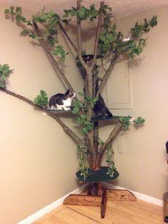 Katt inspiration