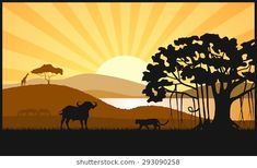 African savanna an evening landscape Black Silhouette, Savannah Chat, Lions, Art Reference, African, Paintings, Landscape, Drawings, Movie Posters