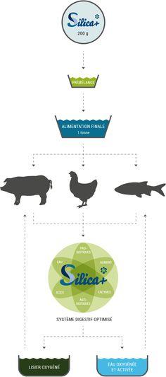 SILICA+ catalyseur nutritionnelle pour l'alimentation animale | Ceresco Nutrition