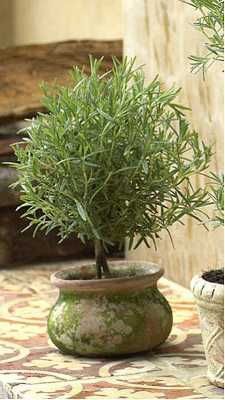 Rosemary topiary - Cute Idea mum...