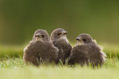 500px 上の Roeselien Raimond の写真 Angry Birds