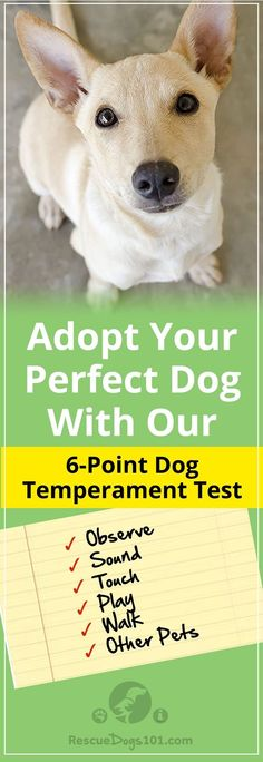 How to Temperament Test a Dog Before You Adopt – Don't judge a book by its cover, or don't judge a dog by its appearance.  Find Your Dog's Personality Type Now! #insidebeauty #adoptdontshop #doglovers #dogadoption #adoptadog #dogstuff #puppylove #rescuedogs101 via @rescuedogs101