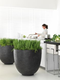 The Ego Giant is a universal planter that could be used as a Floor Standing pot or Large Table Top Display Planter. Resin Planters, Modern Planters, Garden Planters, Planter Pots, Outdoor Pots, Outdoor Decor, Raised Planter, Office Plants, Table Top Display