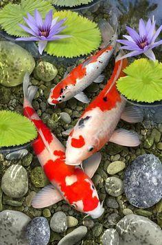 Koi Fish Drawing, Fish Drawings, Koi Fish Pond, Fish Ponds, Koi Art, Fish Art, Koi Painting, Chinese Painting, Carpe