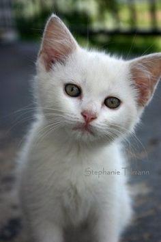 White Kitten Nursery Decor Cat lover Green by 8daysOfTreasures $16.00