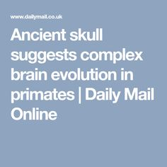 Ancient skull suggests complex brain evolution in primates   Daily Mail Online