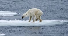 Greenpeace Pictures Reveal An Incredible Year For Environmental Campaigning