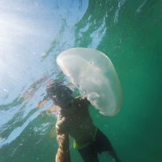 #GoPro #GoProHero #GoProPhoto #goprofeatures #GoProLifeStyle #Guanacaste #CostaRica #ExpediciónCostaRica #Snorkel #Medusa