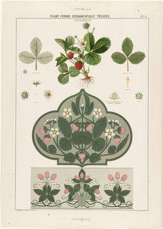 Plant-Forms Ornamentally Treated - Strawberry