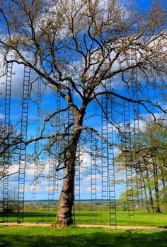 ladder tree. if you climbed each ladder everyday, you'd get your daily workout. Come to think of it, if I climbed just one, I'd be finished for the year!