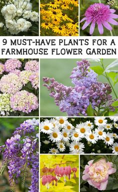 An easy way to add a gorgeous farmhouse flower garden to your home. These 9 plants will give any garden farmhouse charm and beauty!