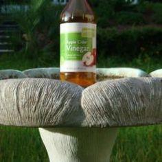 Apple Cider Vinegar 1 capful to keep bird bath clean and reduce algae growth. Also provides vitamins & minerals to birds!