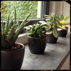 Mini succulents - How to care for them indoors.
