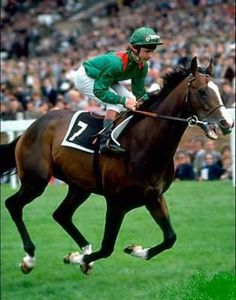 30 years ago, kidnappers broke into the Ballymany Stud in the Republic of Ireland and stole the champion racehorse, Shergar. What happened to the animal remains a mystery. Horse Galloping, Thoroughbred Horse, Sport Of Kings, Racehorse, Show Horses, Horse Riding, Courses, Beautiful Horses, Animals And Pets