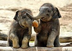 Baby Elephants Having a Chat